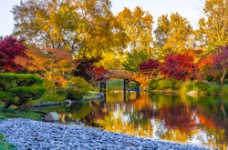 Sunset view of beautiful Japanese garden in Midwestern botanical garden in fall; traditional Japanese bridge in the background