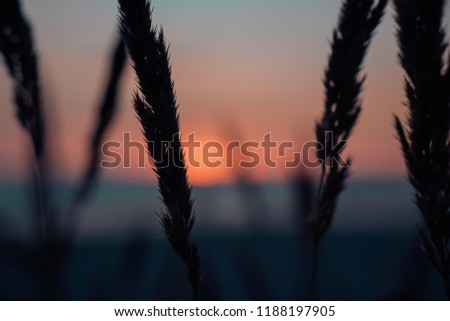 Sunset view through a grass on the beach in Latvia at Baltic Sea #1188197905