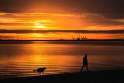 Sunset Walk With Dog On Beach - Man and his dog on a sunset walk at St Kilda Beach