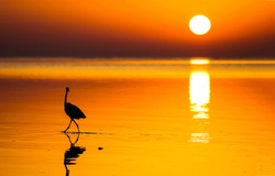 Sunset water horizon bird silhouette view. Sunset water scene. Sunset bird silhouette on water