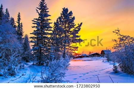 Sunset winter snow nature scene. Winter sunset forest village scene. Sunset winter snow scene