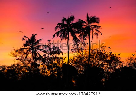 sunset with birds at Bird island, Koggala, Sri Lanka