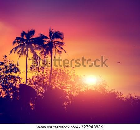 sunset with birds at Bird island, Koggala, Sri Lanka