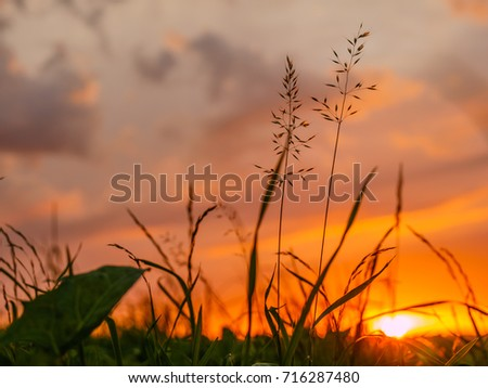 Sunset with clouds and grasses