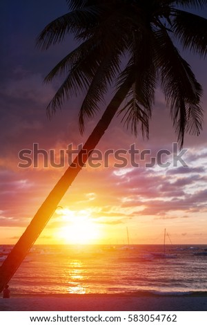 Sunset with coconut palm tree on beach, seaview #583054762