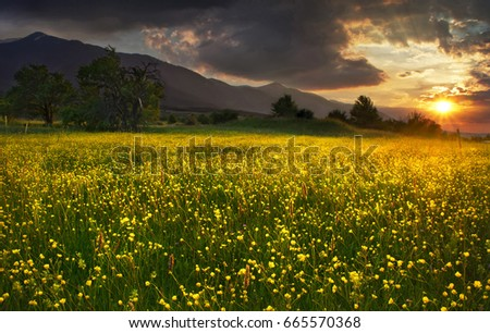 Sunset with flowers #665570368