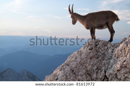 sunset with mountain goat  ...