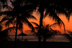 sunset with palm tree beach side