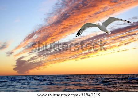 Sunset with shape of seagull. Polish seaside at Baltic sea.