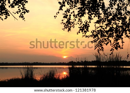 Sunset with silhouette leaves foreground.