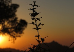 Sunset with tree branches, this picture was taken in Jordan