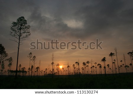 sunset with trees