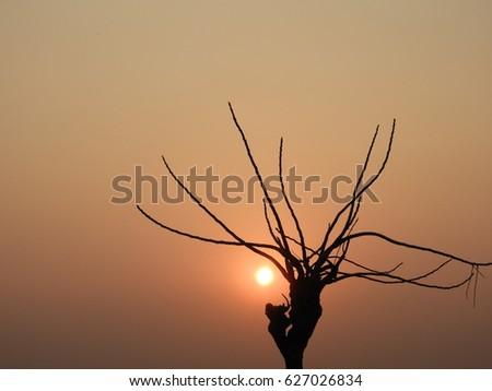 Sunshine #627026834