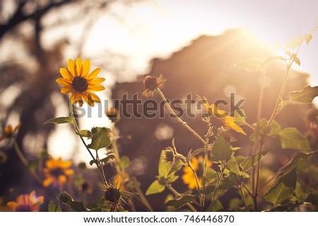 Sunshine  #746446870