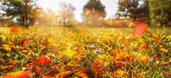 sunshine in autumnal idyllic landscape, fall leaf in meadow, blurred natural autumn background, beautiful empty autumn idyll