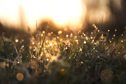 sunshine light and grass dew isolated