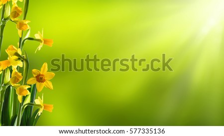 sunshine on easter flowers #577335136