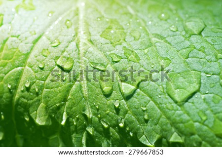 Sunshine Reflection - Water Drop on Leaf - Nature Texture Background