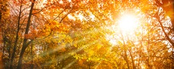 Sunshine through autumn treetops with colorful leaves