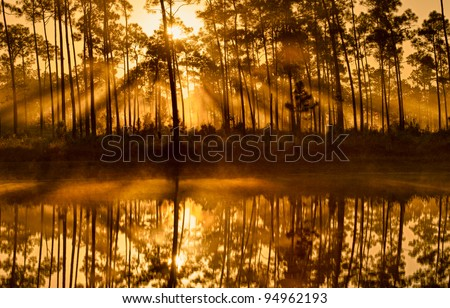Sunshine through the pines at Long Pine Key Lake in Everglades National Park