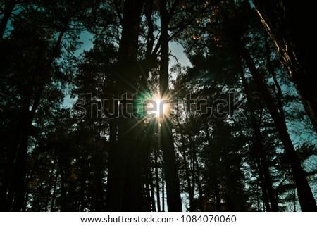 Sunshine through trees #1084070060