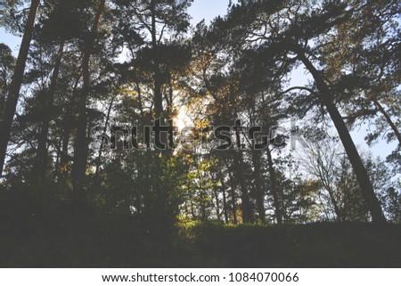 Sunshine through trees #1084070066