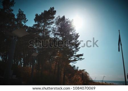 Sunshine through trees #1084070069