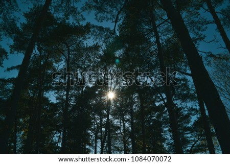 Sunshine through trees #1084070072