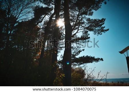 Sunshine through trees #1084070075