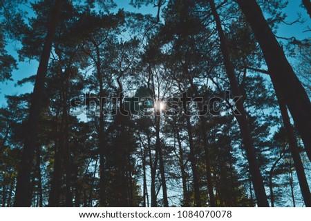 Sunshine through trees #1084070078