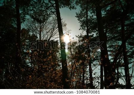 Sunshine through trees #1084070081