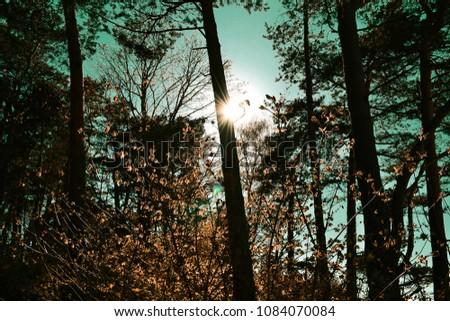 Sunshine through trees #1084070084
