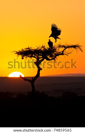 Sunsrise in africa behind a tree with flying birds