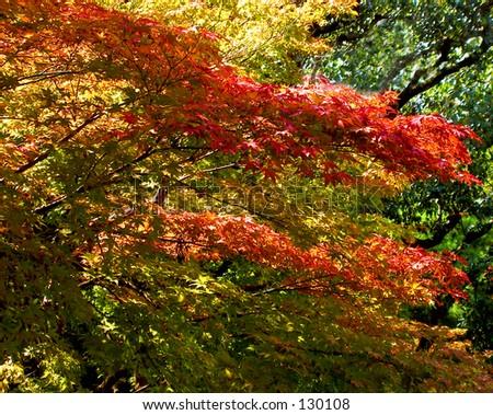 Super autumn colors mix.....Japanese style..:))