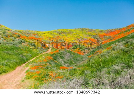 Super Bloom Poppy Flower Field Landscape Shot #1340699342