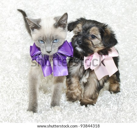 Super cute kitten and puppy together wearing pretty bows, on a white background.