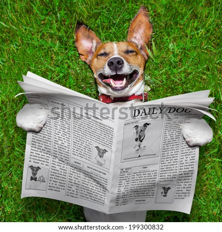 super funny face dog lying on back on green grass , reading gossip