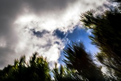 Super-low-angle, abstract, motion-blurred shot of thick rain clouds moving across blue sky with partially silhouetted green foliage in foreground