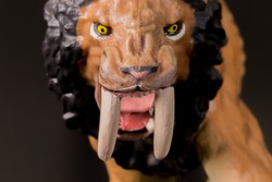 Super macro face close up toy male Smilodon saber-toothed roaring and in attack position with black background