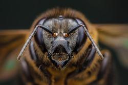 Super macro head and bee eyes