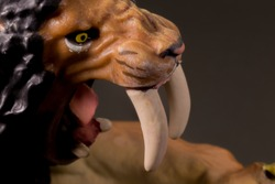 Super macro Head face close up toy male Smilodon saber-toothed roaring and in attack position with black background
