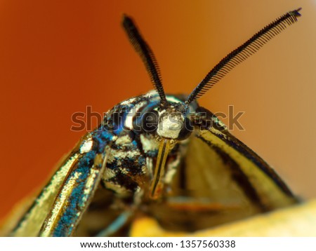 Super Macro, stack macro shot Daytime Butterfly.