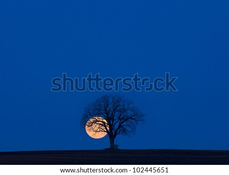 Super moon and lone tree