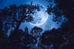 Super moon or big moon. Silhouette the branches of trees against blue sky on tranquil nature. Beautiful landscape with large moon, outdoors at nighttime. The moon were NOT furnished by NASA.