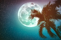 Super moon with many stars. Beautiful night landscape of sky with full moon behind betel palm tree, outdoor in gloaming time. Serenity nature background. Cross process. The moon taken with my camera.