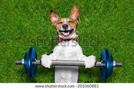 super strong dog lifting  big blue dumbbell bar