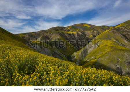 Superbloom In the Carrizo Plains