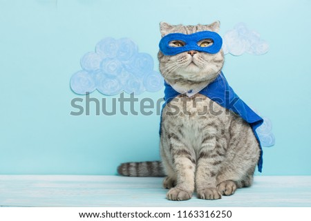 superhero cat, Scottish Whiskas with a blue cloak and mask. The concept of a superhero, super cat, leader