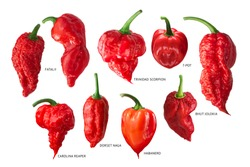 Superhot or extremely hot chile peppers collection, isolated