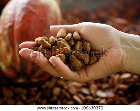 Superior view of handful of cacao beans